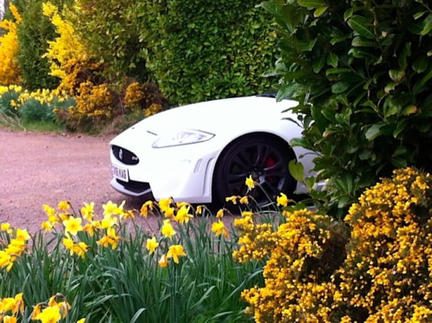 Jaguar XKR-S poking out from bushes