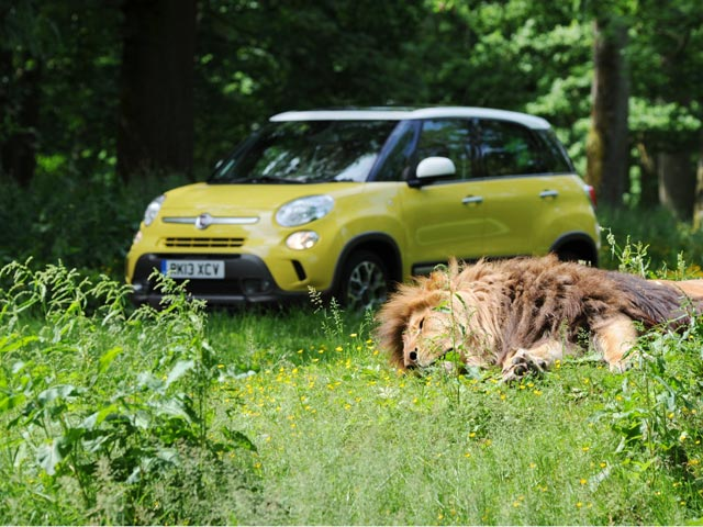 The Fiat 500L Trekking and a lion