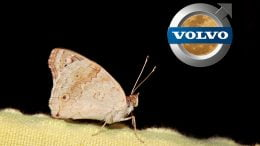 Volvo moth detection system